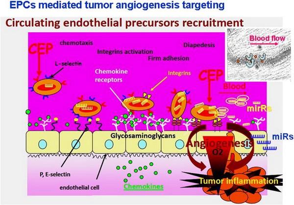 illustration_vascular_pharmacology.jpg