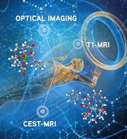 Un agent de contraste 3 en 1 pour imager l'activité enzymatique