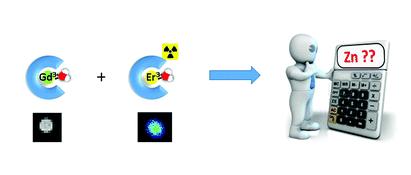 Une méthode de détection quantitative du zinc par IRM