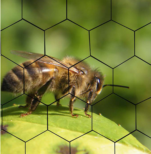 "seminar ""Bees societies, human societies, an interdependence from prehistory to the future"""