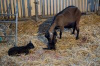 Pour des systèmes d'élevage durables, plus respectueux de l'environnement, de la santé des animaux et des Hommes.
