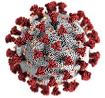 Modélisation de l'épidémie